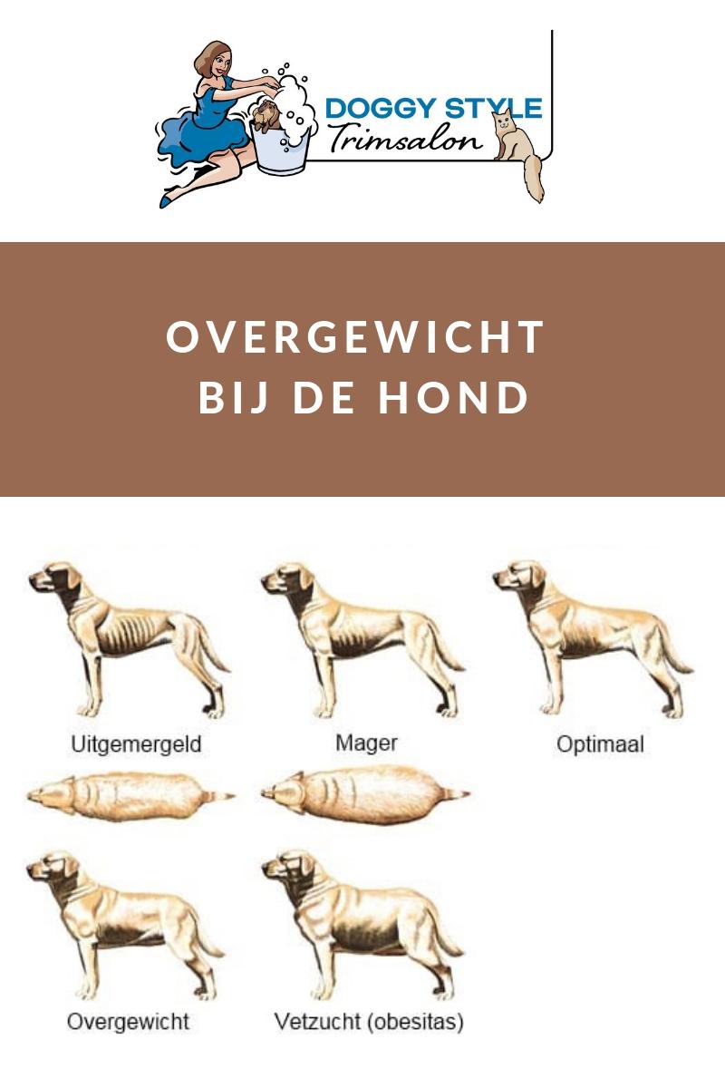 blog overgewicht bij hond