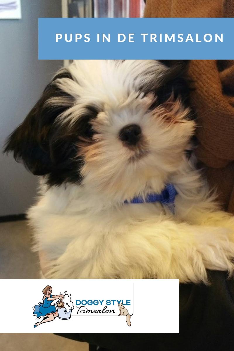 blog pups in de trimsalon