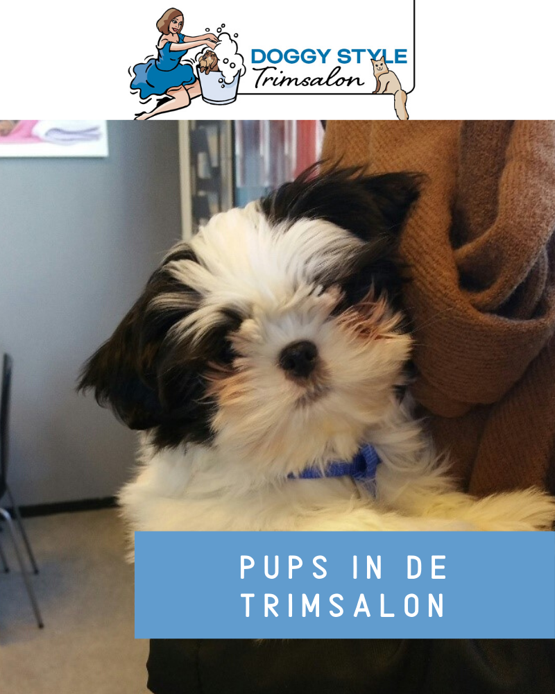 Doggy Style Blog Pups in de trimsalon